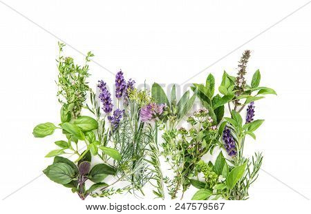Fresh Herbs On White Background. Basil, Rosemary, Sage, Thyme, Mint, Dill, Savory, Lavender Food Bac
