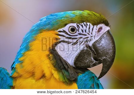 Image Of Portrait Of The Macaw Parrot