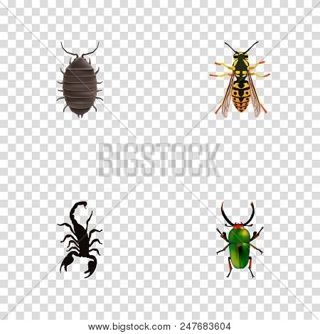 Set Of Insect Realistic Symbols With Scorpion, Sting, Bug And Other Icons For Your Web Mobile App Lo