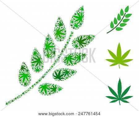 Leaf Branch Composition Of Weed Leaves In Various Sizes And Green Tones. Vector Flat Grass Leaves Ar