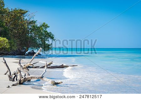 Driftwood And Bent Trees By The Seashore On This Beautiful White Sand Caribbean Electric Blue Beach