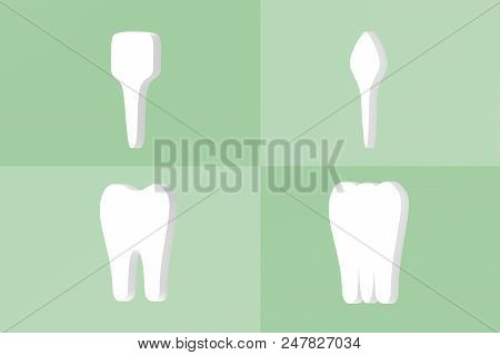 Tooth Type - Incisor, Canine, Premolar And Molar - Dental Cartoon 3d Render Flat Style Cute Characte