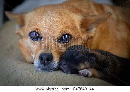 Newborn puppy from mother. The concept of maternal instinct. The problem of stray dogs poster