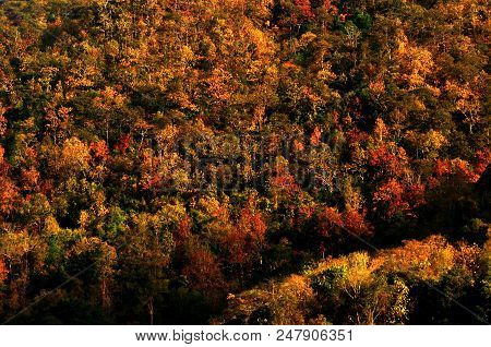 Beautiful Color Of Autumn Environment, Colorful Tree Pattern, Fall Season Pattern, Fall Color, Fores