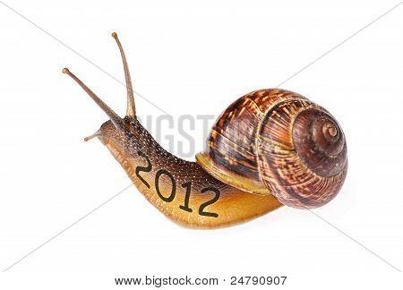 Snail 2012