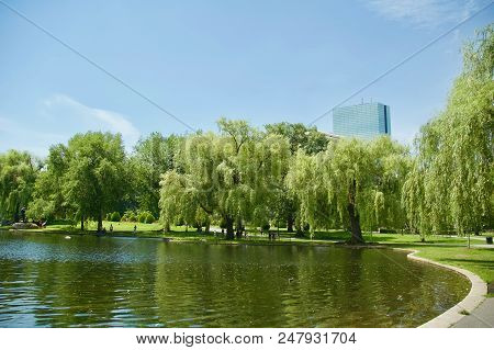 Gorgeous Views Of The Lush Greenery And Trees At The Boston Public Garden In Boston, Massachusetts.
