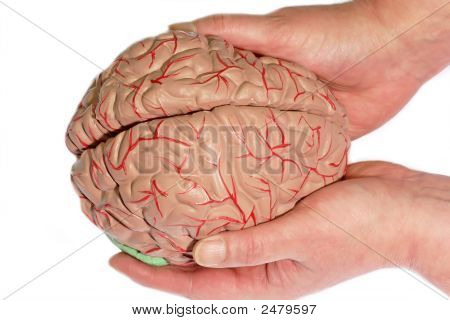 Holded Human Brain