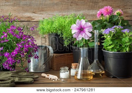 Seedling Of Garden Plants And Flowers, Watering Can And Homeopathic Remedies For Plants. Natural Alt