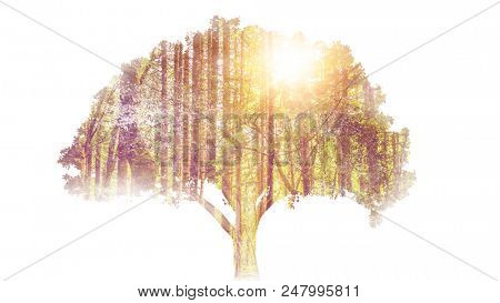 Double exposure of a single tree with forest overlay in the sunlight