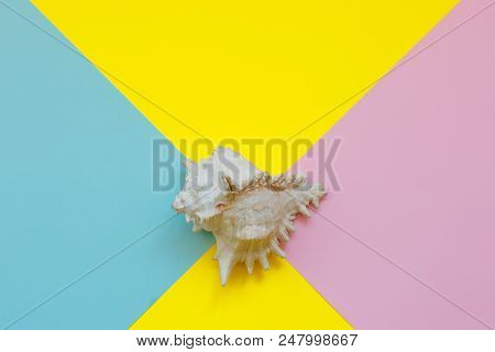 Large Seashell On Colorfull Paper Background. Top View. Copy Space. Summer Season .summer Time. Sea