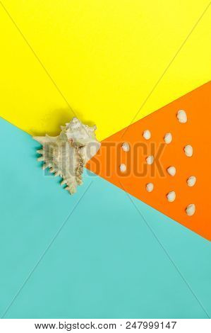 One Big Seashell On Colorful Background And Many Small Sea Shell On Orange Background. Top View. Sum