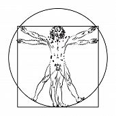 Stylized sketch of the Vitruvian man or Leonardo's man. Homo vitruviano  illustration based on Leonardo da Vinci artwork poster