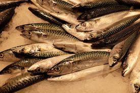 Close-up Of Fish For Sale At The Mercat De Sant Josep De La Boqueria Public Market In Barcelona (cat