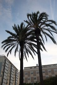 Palm Trees Near Port Vell In Barcelona (catalonia, Spain). Apartment Blocks And Blue Afternoon Sky W