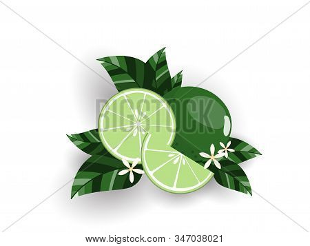 Vector Illustration Of Fresh Limes With Leaves, Slices Limes And Lime Flowers Isolated On White Back