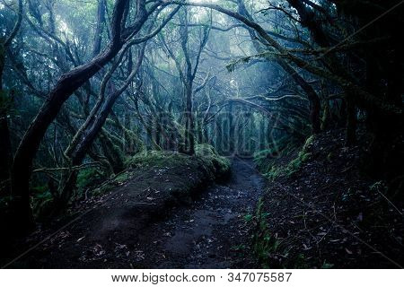 Dark Foggy Forest And Path Through It. Wild Woodland Nature Background