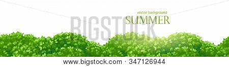 Background With Fluffy Thickets, Bushes With Dense Foliage. Seamless Border For Design.