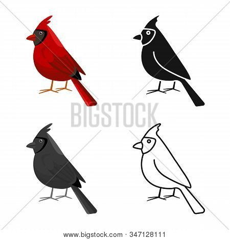 Isolated Object Of Cardinal And Red Symbol. Collection Of Cardinal And Bird Vector Icon For Stock.
