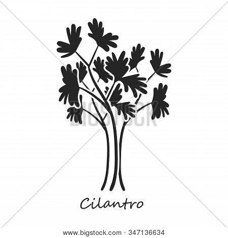 Cilantro Vector Icon.black, Simple Vector Icon Isolated On White Background Cilantro.
