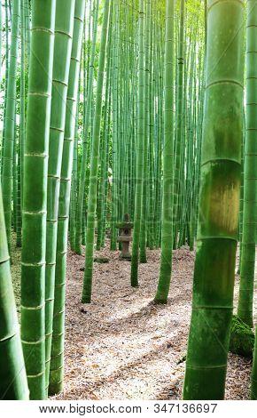 Ancient decorative stone lantern and bamboo in Hasedera (Hase-dera) temple, Kamakura, Kanagawa prefecture, Japan
