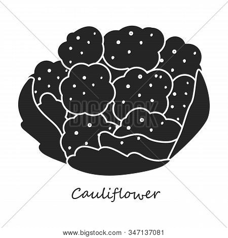 Cauliflower Vector Icon.black, Simple Vector Icon Isolated On White Background Cauliflower.