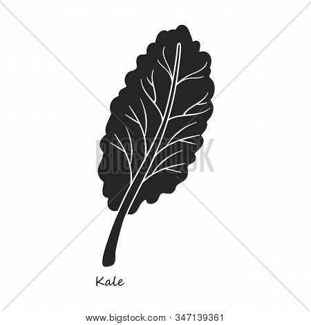 Kale Vector Icon.black, Simple Vector Icon Isolated On White Background Kale.