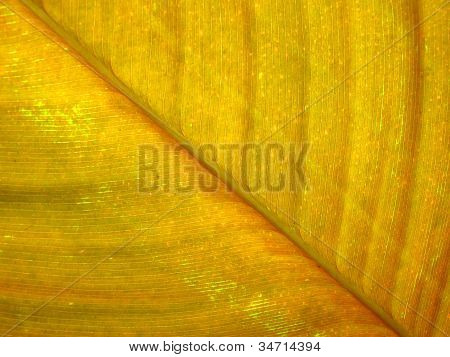 Texture Of Yellow Leaf