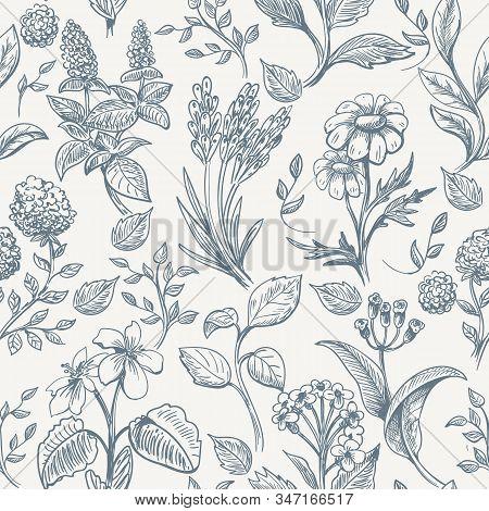 Herbs Sketch Seamless Pattern. Botanical Herbs Texture Fabric, Romantic Hand Drawn Wild Flowers Seam