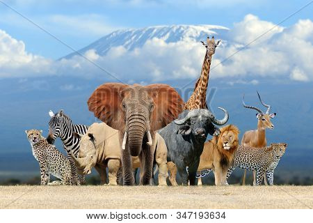 Group Of African Safari Animals Together On Kilimanjaro Mount Background