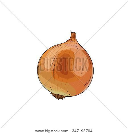 Onion Organic Farm Vegetable. Healthy Raw Vegetarian Vegan Food. Isolated Vector Illustration Onion