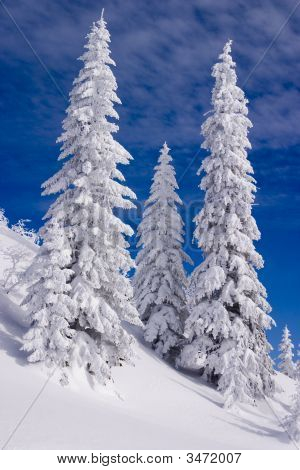 Snowy Landscape On Jahorina Mountain Near Sarajevo, Bosnia And Herzegovina