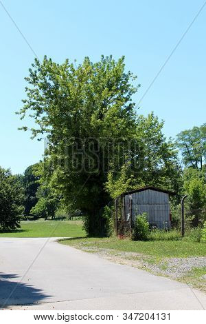 Large Mighty Tree Rising High Above Small Storage Shed Surrounded With Rusted Wire Fence At Abandone