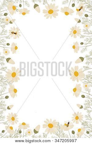 Vector Beautiful Spring Flower Chamomile Frame. Vector Layout Decorative Greeting Card Or Invitation