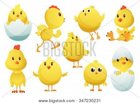 Cute Cartoon Chicken Set. Funny Yellow Chickens In Different Poses, Vector Illustration. Collection