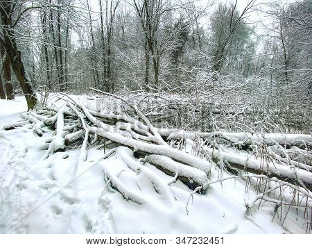 Fallen Trees Under The Snow In The Winter Forest. Winter Landscape