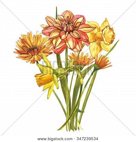 Watercolor Narcissus And Dahlias. Wild Flower Set Isolated On White. Botanical Watercolor Illustrati