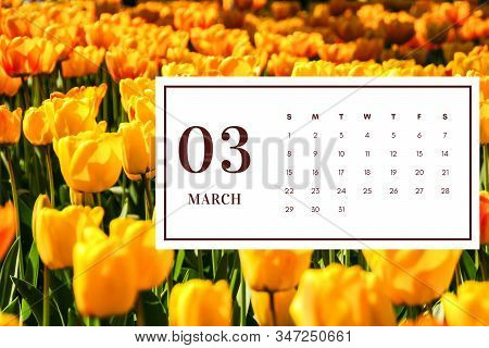 March 2020 Monthly Calendar, Monthly Calendar Of The 2020 Year With Flowers Illustration March
