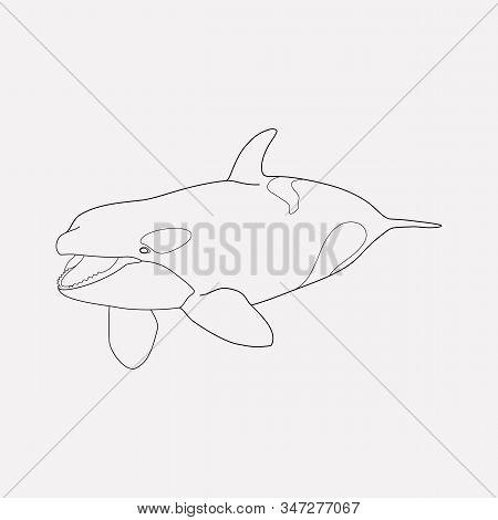 Killer Whale Icon Line Element. Vector Illustration Of Killer Whale Icon Line Isolated On Clean Back