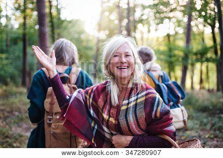 Senior Women Friends Walking Outdoors In Forest.