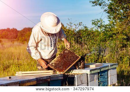 Young Beekeeper Working In The Apiary. Beekeeping Concept. Beekeeper Harvesting Honey
