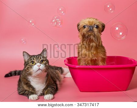 Dog And Gray Cat Is Washed In Pink The Pelvis