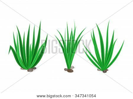 Vector Set Of Realistic Spring Green Grass With Stones Isolated On White Background. Icon Of Bush Of