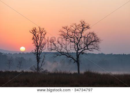 Sunrise at Kanha National Park