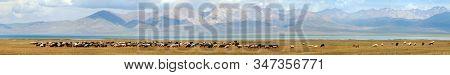 Flock Of Goads And Sheeps On Pastureland And Son-kul Lake. Tian-shan Mountains In Kyrgyzstan