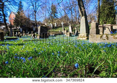 Vilnius, Lithuania - April 14, 2019: Blue Flowers In The Bernardine Cemetery, One Of The Three Oldes