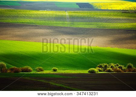 Splendid view on of sunlit wavy fields of agricultural area. Location place of South Moravia region, Czech Republic, Europe. Minimalistic landscape of agrarian industry. Discover the beauty of world.