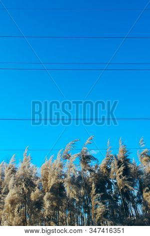 Nature Background, Close-up. Plants Over Blue Sky. Sunny Day. Swamp Grass. Swamp Nature.