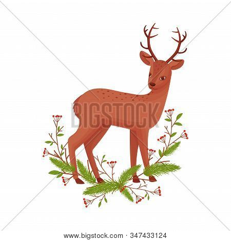 Brown Deer Near Fir Tree Twigs. Hoofed Ruminant Mammal Standing In Branches Vector Illustration