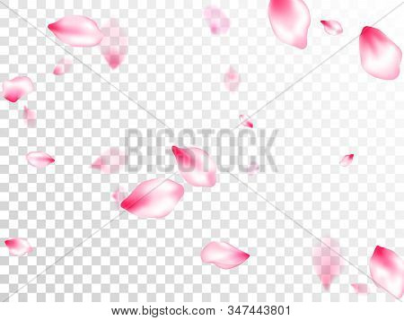 Pink Sakura Petals Confetti Flying And Falling On Transparent Background. Park Graphic Elements. Pas