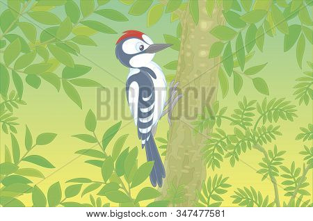 Funny Woodpecker Climbing On A Tree And Drumming A Trunk To Find Insects For Dinner In A Green Summe